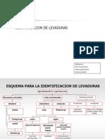 IDentificación de levaduras 2 gaby.ppt