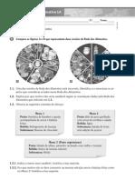 fichaava1a-130520053334-phpapp02.pdf