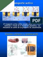 Quintas diapositivas