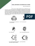 Manual de Oftalmologia
