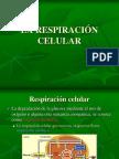 respiracion celular 3a