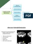 Cirugia Apendicitis