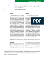 Función del retículo sarcoplásmico