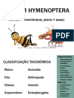 Hymenoptera 1