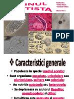 Regnul Protista.pptx