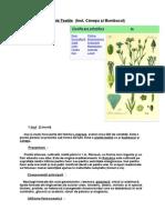 Plantele Textile.doc