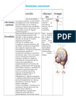 Sistema Nerviosobiologia