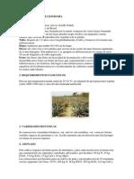 cultivo de piñas