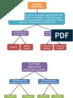 Práctica 4 Sistema nervioso 2.pptx