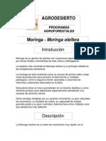 Moringa 1