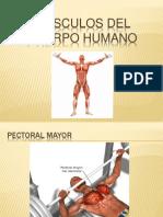 Músculos del cuerpo humano.pptx