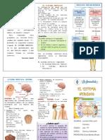 El Sistema Nervioso Triptico1