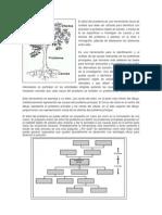 árbol_del_problema
