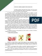 10. Fructe exotice.doc