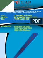 Diapositiva Triangulos Del Cuello