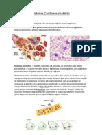 Sistema Cardiorespiratório - sangue