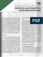 bacilos entericos grammnegativos