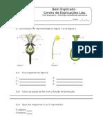 2. Teste Diagnóstico -  Diversidade das Plantas (2)[1]