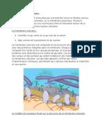 1-4 membrane cellulaire.doc
