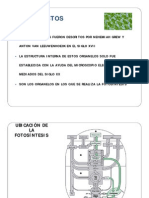 Cloroplastos y Fotosíntesis_13A