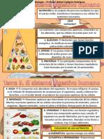 Tema 5 Aparato Digestivo