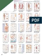 Candent Catalogue Charts