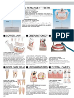 13 Human Anatomy ING