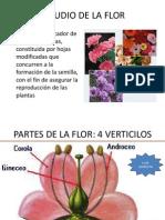 Sesion Estudio de La Flor