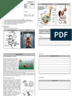 94968222 Practica Organos de La Digestion