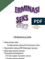 BLOK 4 Determinasi Seks1