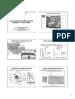 Electrofisiologia Cardiaca Normal y Patologica Postgrado 2013