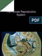 29a femalereproductive