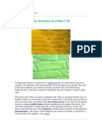 The Structure of a Plant Cell.pdf