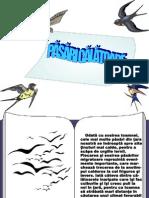 0_pasaricalatoare