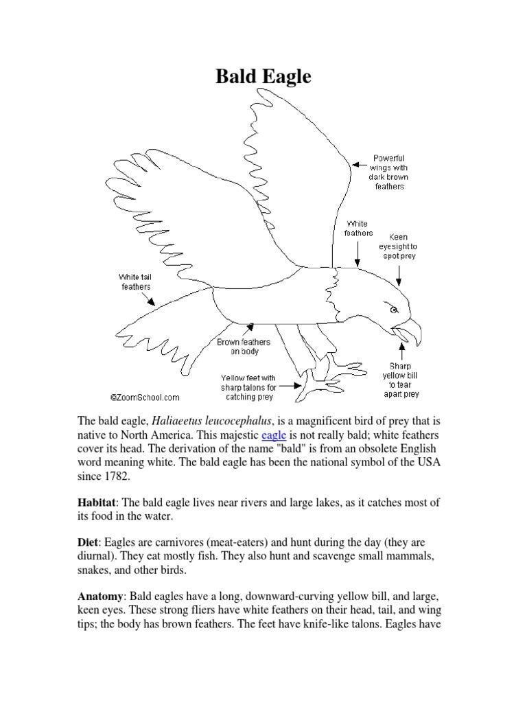 Bald Eagle.pdf | Bald Eagle | Eagle