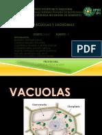 Vacuolas y Lisosomas