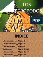 artropodosteretama-111014114149-phpapp01