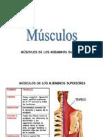 Los Musculos 2