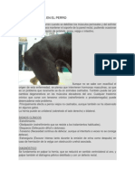 Hernia Perineal en El Perro