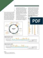 pUC18-pUC19-map.pdf