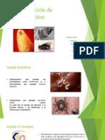 Clasificación de parásitos