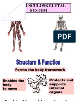 anatomy of musculoskeletal.ppt