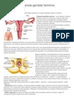 Organele genitale feminine.docx