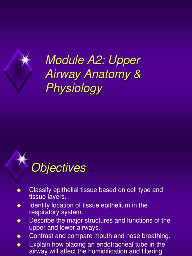 Module A2 Anatomy Of Upper Airwayppt Epithelium Respiratory Tract