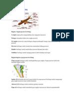 60453425-bagian-pesawat-terbang.pdf