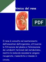 appunti biochimica del rene