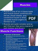 anatomy presentation ho 5(Muscles)