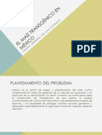 El maíz transgénico en México (2)