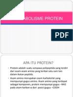 Metabolisme Protein Bebek