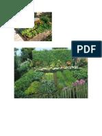 Plantas Amigas Parte 1